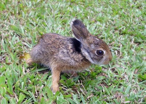 rabbit-402323_640